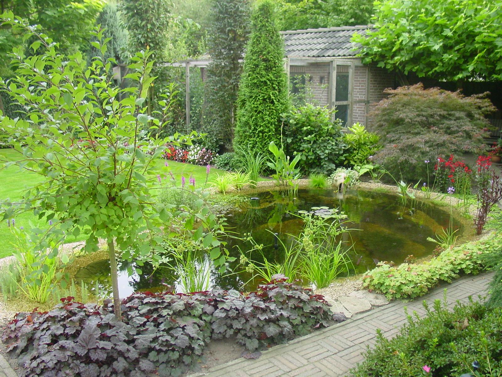 Tuinvijver siervijver terrasvijver vijver aanleggen for Kleine tuinvijver